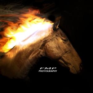 Horse_1